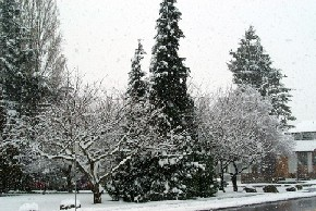 snow01-s.jpg